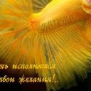 Елена Кот